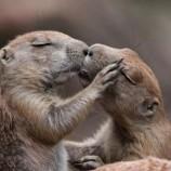 #Hashtag e riproduzione delle lontre