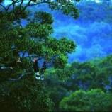 Sumatra e i soliti Ponghi