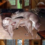 funny-pictures-auto-animals-deer-373614