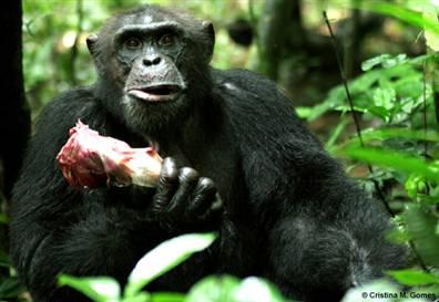 Nella foto: il nostro compagno di DNA vegetariano complotta con le industrie di produzione della carne e con il NWO.