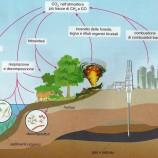 Il ciclo del carbonio e gli agenti di trasformazione planetaria