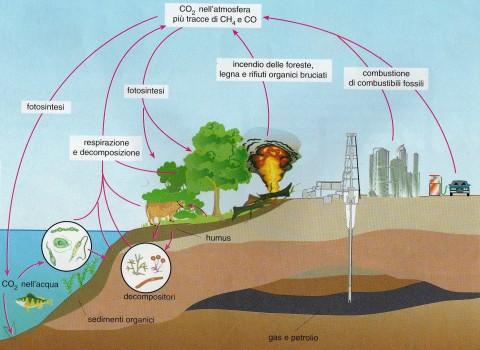 Il ciclo attuale del carbonio
