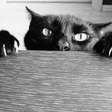 black-cat-450×362