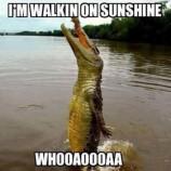 happy-alligator