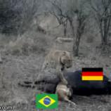 brazil germany thumb