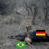 brazil vs germany thumb