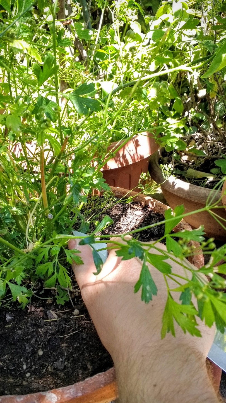 Perché se apprezzate pulire per mezz'ora le cozze a 2, 90€ al chilo ce lo avrete di sicuro un giardiniere.