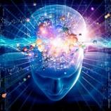 Le neuroscienze nel diritto. Cosa sono?