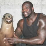shaq-foca