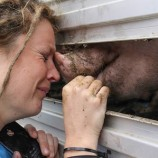 Vegani: perché uccidere per mangiare è omicidio