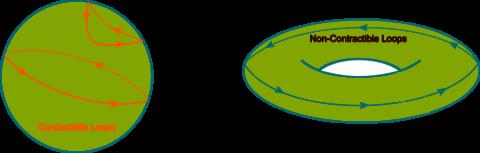 Disegnando curve chiuse su una ciambella, non vi è modo di contrarle ad un punto.