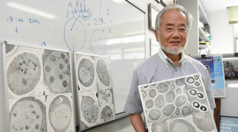 "In this July, 2016 photo, Japanese scientist Yoshinori Ohsumi smiles at the Tokyo Institute of Technology campus in Yokohama, south of Tokyo. Ohsumi was awarded this year's Nobel Prize in medicine on Monday, Oct. 3, for discoveries related to the degrading and recycling of cellular components. The Karolinska Institute honored Ohsumi for ""brilliant experiments"" in the 1990s on autophagy, the machinery with which cells recycle their content. Disrupted autophagy has been linked to various diseases including Parkinson's, diabetes and cancer, the institute said. (Akiko Matsushita/Kyodo News via AP)"