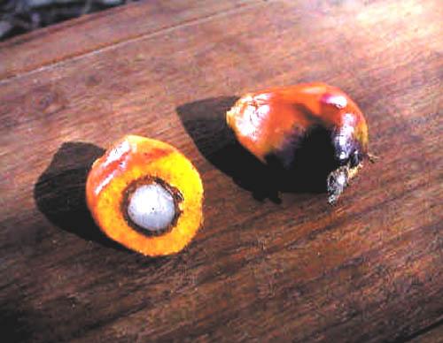 Un frutto della palma da olio.