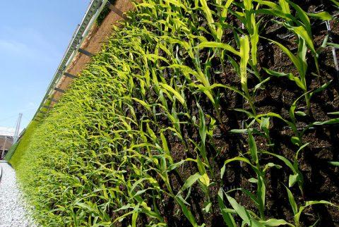 """Il """"Muro Verde"""" presentato ad Expo 2015 da Israele"""