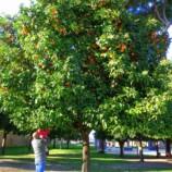 giardino-degli-aranci