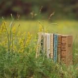 Primavera letteraria: quattro consigli per la bella stagione