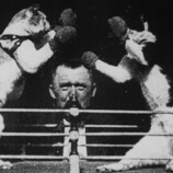 212550647-duel-animal-fight-box-ring-turn-of-the-century